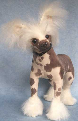 Chinese Crested Top Dog Photo